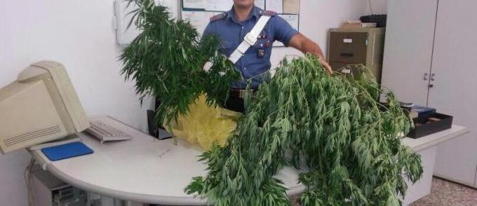 Coltivava cannabis in un mobiletto serra in casa, in manette 26enne
