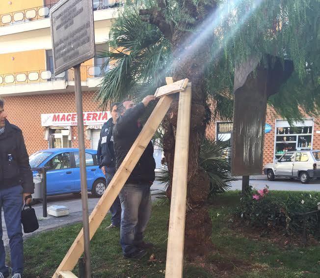 albero caduto sant'anastasia