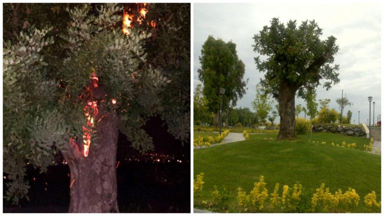 Atti vandalici e furti, baby vandali incendiano albero nella villa comunale
