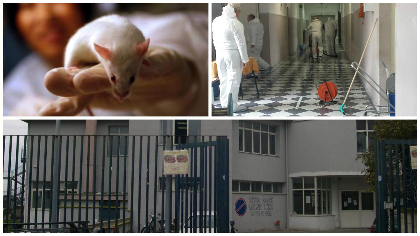 """Raid con i topolini all'alberghiero """"Tognazzi"""", colpiti anche la succursale e l'agrario"""