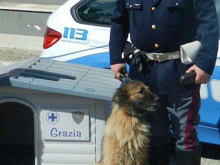I poliziotti adottano cane salvato in autostrada