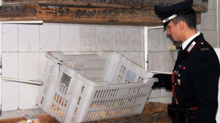 Massa, blitz nei panifici: sigilli in via Vesuvio. Quintali di pane sequestrato