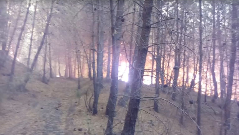 Incendio Parco. Interrogazione parlamentare di Auricchio e Langella