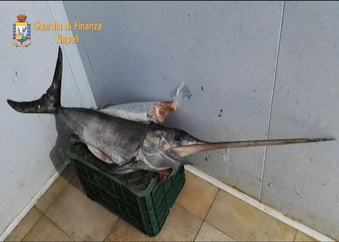 prodotti-ittici-sequestro3