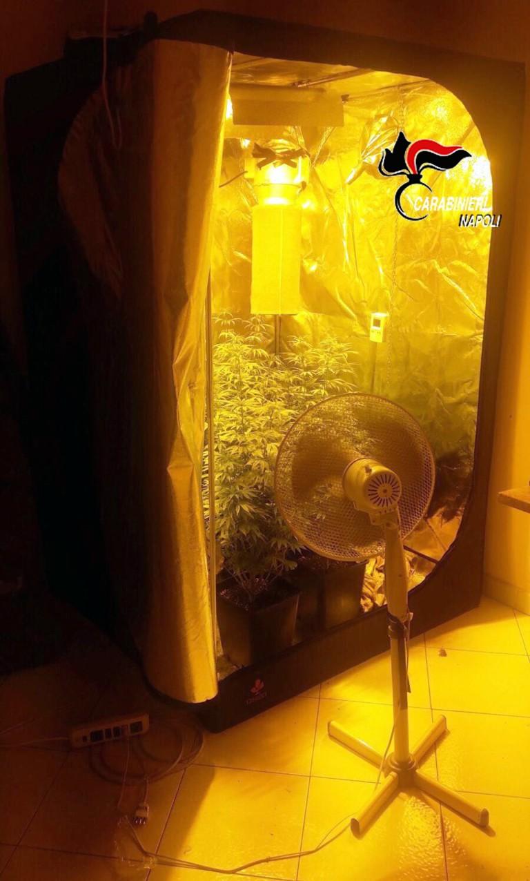 Serra per cannabis in casa: arrestato 27enne di Marigliano