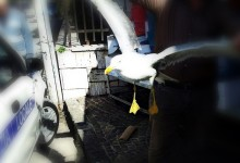 Un gabbiano aggredisce i passanti, paura a Sant'Antimo