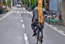 Lascia l'auto a casa, in regalo una bici per girare in città