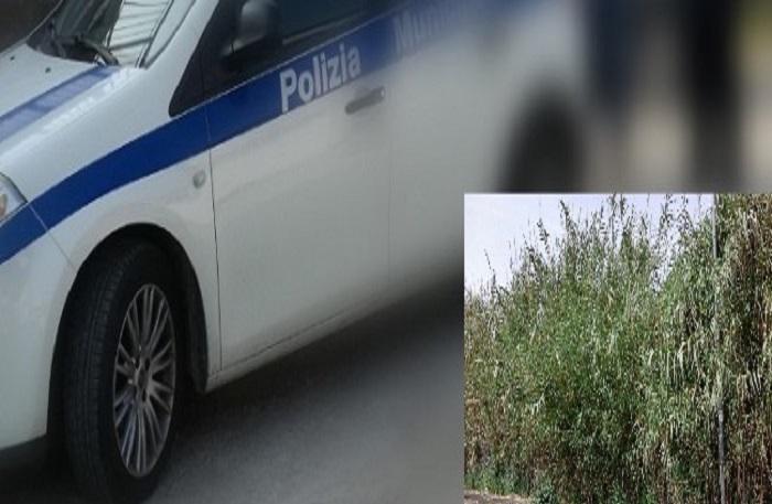 Terreni incolti usati come discarica, 5 persone sanzionate dalla municipale