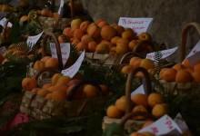"""Nasce nel Parco del Vesuvio il presidio Slow Food """"L' Albicocca del Vesuvio"""""""