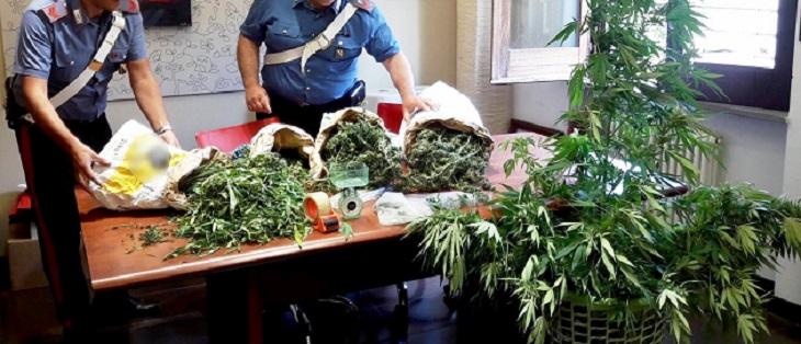 30.09.2017 - piante cannabis somma vesuviana