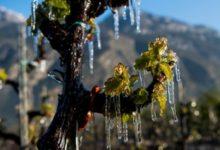 Danni da gelo 2017, contributi a imprese agricole. Ecco come