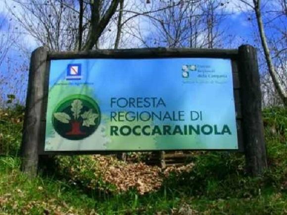 I castagni della foresta di Roccarainola, domani il convegno