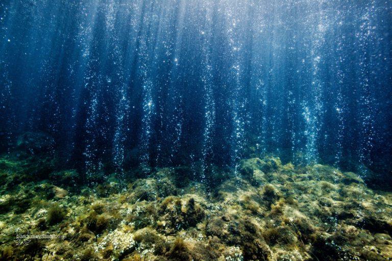 La National Geographic ad Ischia per i cambiamenti degli habitat marini