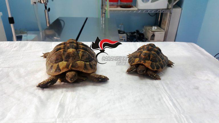 Ritrovate due tartarughe a rischio estinzione con segni di maltrattamenti