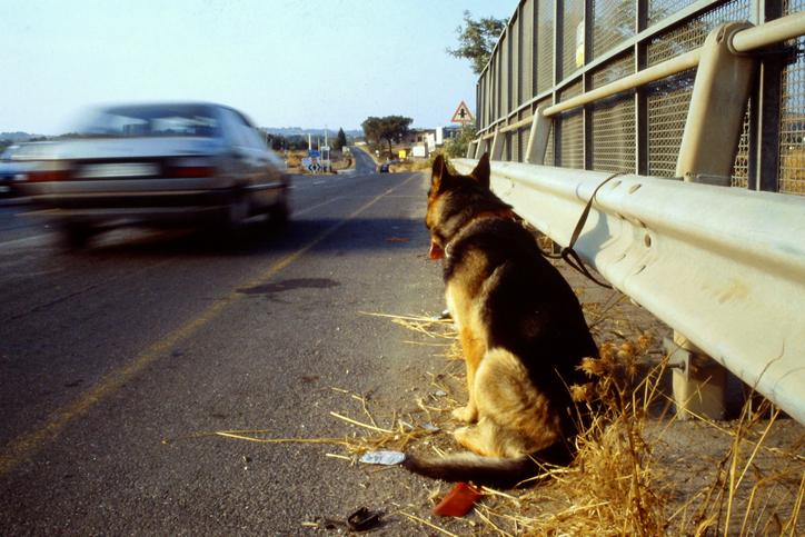 Fa scendere il cane dal furgone e scappa via, abbandono a Sant'Anastasia