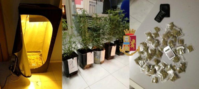Nola. Coltiva marijuana nel box, arrestato 23enne di Pomigliano d'Arco