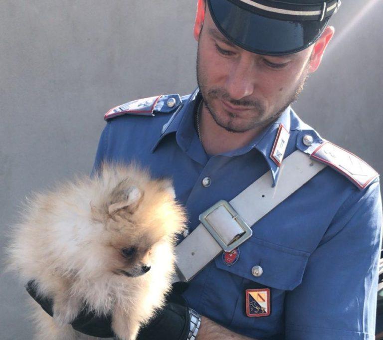 Ruba cane da negozio di animali e lo mette in borsa, arrestata 39enne