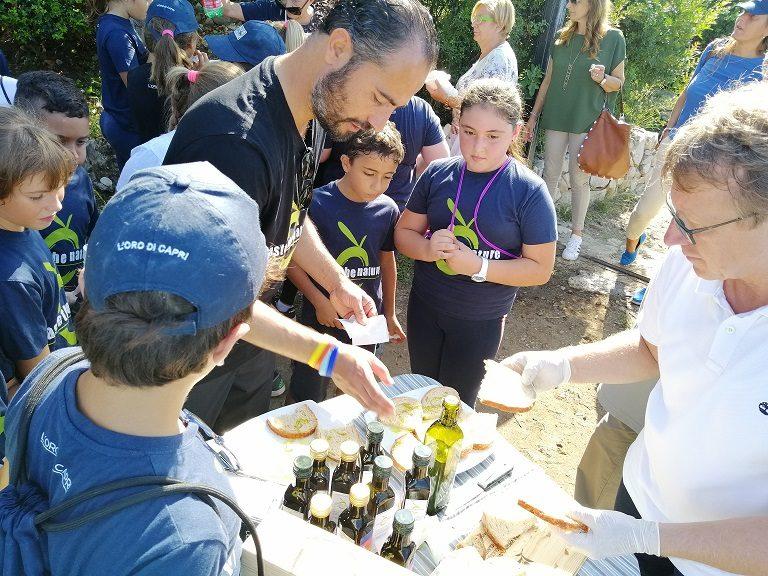 Ad Anacapri è tempo di raccolta delle olive con gli alunni delle primarie dell'I.C. Gemito