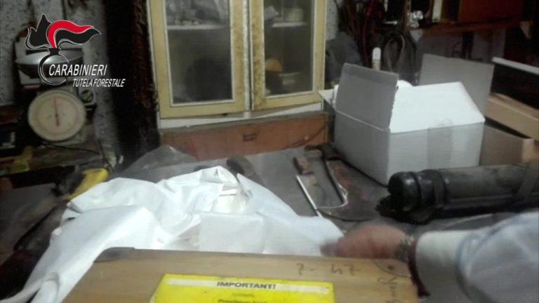 Macellazione abusiva in una casa abbandonata a Marigliano