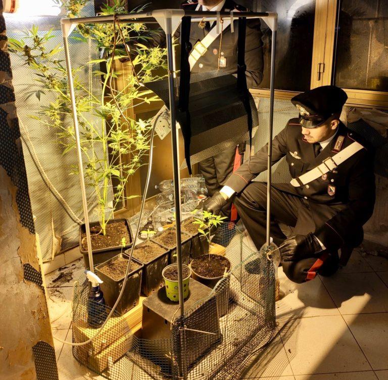 Serra di marijuana in casa, arrestato 23enne di Casalnuovo
