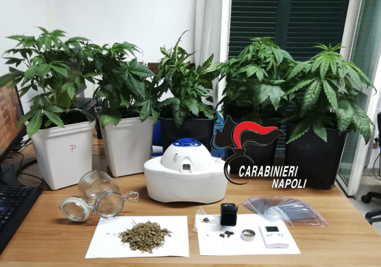 Serra di marijuana in casa, arrestato 35enne di Marigliano
