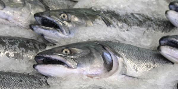 """Biodiversità, esperti a tavola per spiegare le qualità del pesce """"povero"""""""