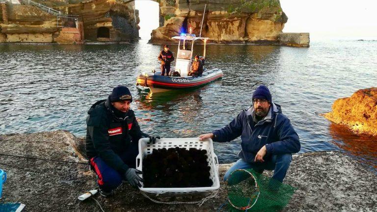 Pescatori di frodo, bracconieri al Parco della Gaiola fermati dai carabinieri