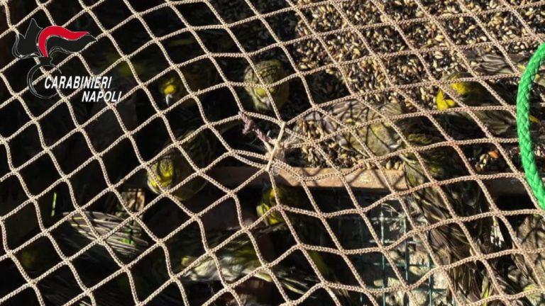 Nola. Maltrattamento animali, denunciato bracconiere di Somma Vesuviana