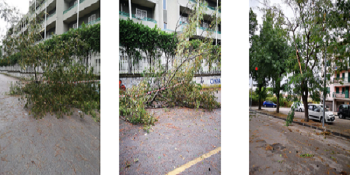 crollo alberi boschetto